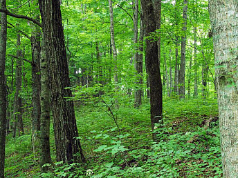 About 35 hectares of forests in Armenia's provinces to be restored in 2014