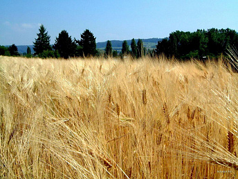 Elaboration of 2015-2025 agriculture stable development strategy for Armenia to be completed by December 2014