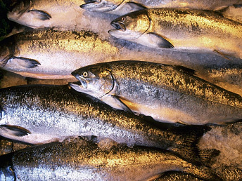 Armenian fish products likely to be sold in Europe from autumn