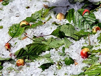 Hailstorm damages crops in Aragatsotn of Armenia