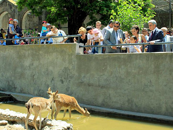 The city municipality will release 300 million drams for Yerevan zoo