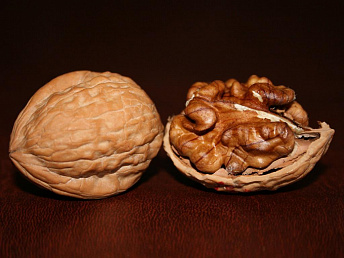 Lebanese company to establish  pecan nut orchards in Armenia