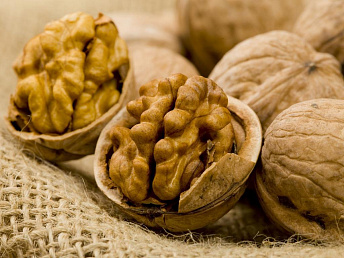 Lebanese businessman may start nut processing in Armenia